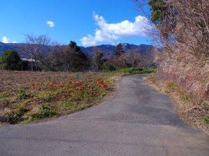 北側道路写真